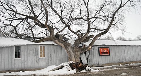Tree falls under weight of snow on Lyndon Building Materials.