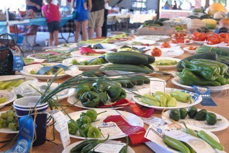 Local gardeners filled the exhibit tables with fresh vegetables during the Overbrook Osage County Fair.
