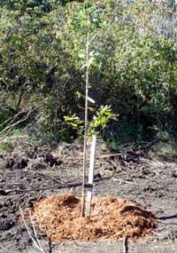 110913-nature-tree
