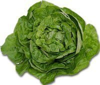 120213-lettuce