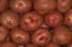 011414-garden-patch-potato