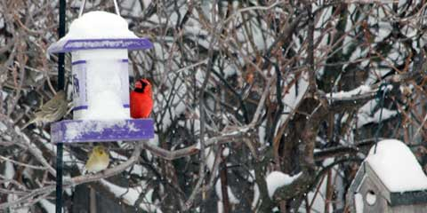 012914-bird-feeders