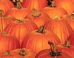 013014-pumpkins