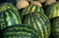 030214-garden-watermelons
