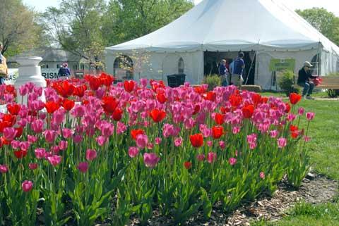 050314-tulips-sampler
