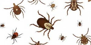 051514-ticks