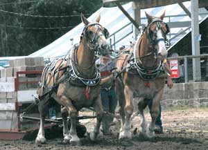 060914-draft-horses