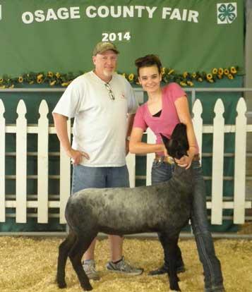 070814-gr-ch-sheep
