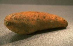 121214-tgp-sweet-potato