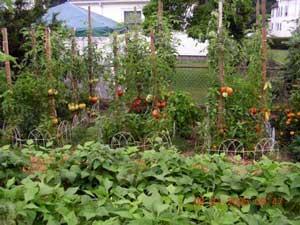 022415-veg-garden