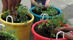 050615-container-gardening