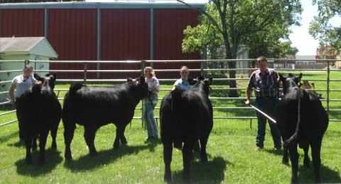 062515-melvern-beef-show