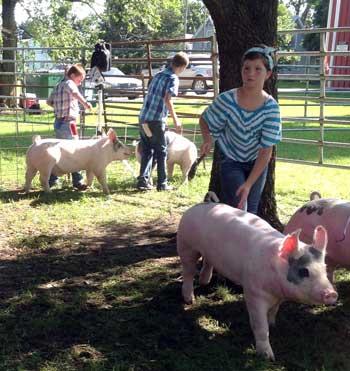062515-melvern-swine-show