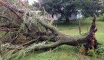 062515-overbrook-tree