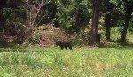 062715-kdwpt-black-bear