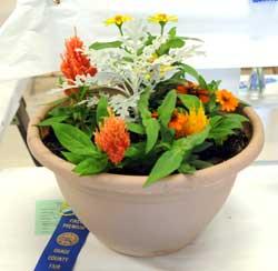 070215-os-co-fair-flowers