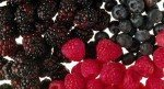 021016-berries-fruit-worksh