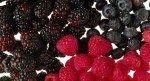 021016-berries-fruit-worksh