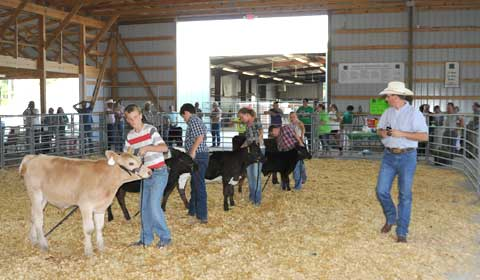062916-2015-bucket-calf-sho