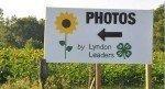 081916-Sunflowers
