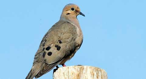 082616-kdwpt-dove