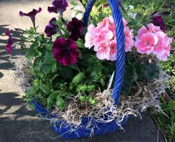 Susan Raby's decorative baskets for entryways and patios will be featured at the Carbondale City Library plant sale. The sale is to raise money for a new library.